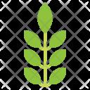 Herb Vegetarian Healthy Icon