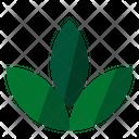 Herb Leaf Icon