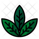 Herb Leaf Icon