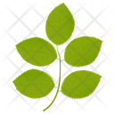 Hickory Leaves Icon