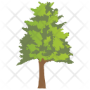 Hickory Locust Thorny Icon