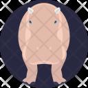 Hippopotamus African Mammal Icon