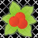 Holy Berries Mistletoe Berries Icon