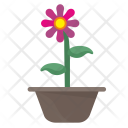 Home Plant Rose Icon