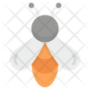 Honey Bee Insect Bee Icon
