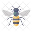 Honey Bee Apis Bumblebee Icon