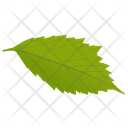 Hornbeam Leaf Icon