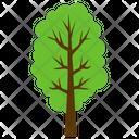 Hornbeam Tree Icon