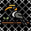 Hornbill Bird Hornbill Bird Icon