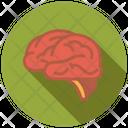 Human Brain Biology Brain Icon