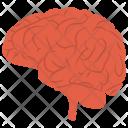 Brain Human Mind Icon