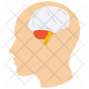 Brain Human Brain Human Organ Icon
