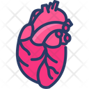 Cardiology Heart Human Icon