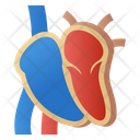 Human Heart Dissection Icon