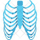 Human Ribs Anatomy Body Icon
