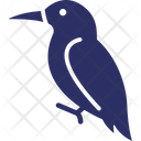 Hummingbird Toucan Bird Icon