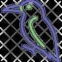 Hummingbird Toucan Bird Icon