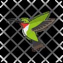 Humming Bird Bird Singing Humming Icon