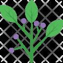 Hyacinth Icon