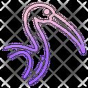 Ibis Icon