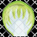 Iceberg Cabbage Lettuce Icon