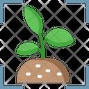 Image Recognition Plant Image Recognition Plant Icon