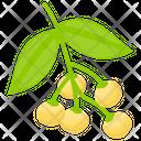 Inca Berries Icon