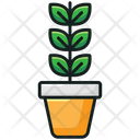 Potted Plant Grass Plant Nature Icon
