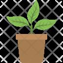 Indoor Plant Gardening Icon