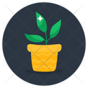 Indoor Plant Flower Pot Potted Plant Icon