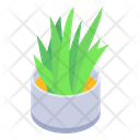 Aloe Vera Plant Indoor Plant Succulent Icon