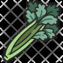 Ingredient Vegetable Celery Icon