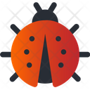 Insect Bug Spring Icon