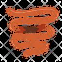 Intestine Infection Inflammation Intestine Icon
