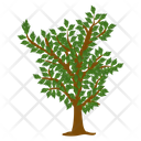 Jackfruit Tree Fruit Tree Wild Tree Icon