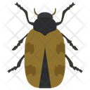 Japanese Beetle Insect Scarab Beetle Icon