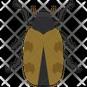 Japanese Beetle Icon