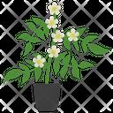 Jasmine Potted Plant Icon