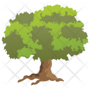 Jerusalem Thorn Icon