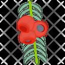 Juneberry Icon