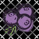 Juniper berry Icon