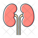 Kidney Kidneys Organ Icon