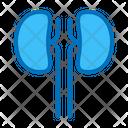 Kidney Icon