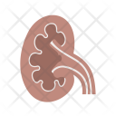 Kidney Body Organ Icon