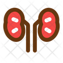 Kidney Medicine Health Icon