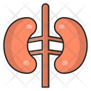 Kidney Anatomy Body Icon