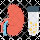 Kidney Test Icon