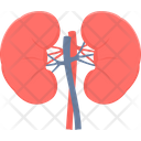 Kidneys Organ Body Icon