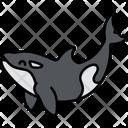 Killer Whale Fish Sea Icon