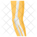 Knee Joints Icon